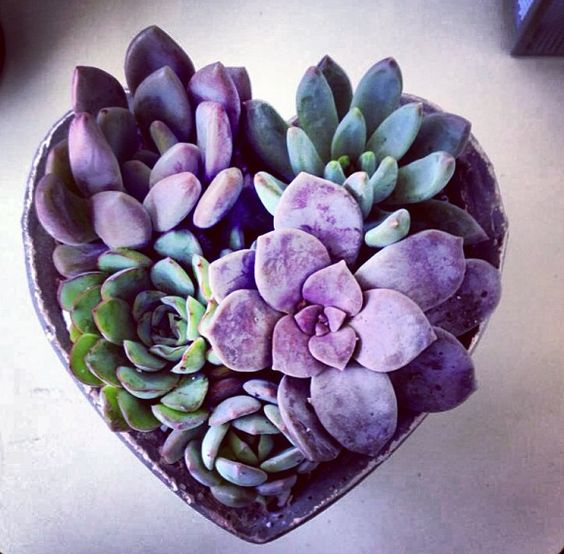 Ultra Violet Succulent | Pantone Color of the Year 2018